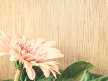 Pink daisy gerbera flowers on wooden background vintage tones Stock Photography