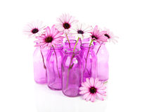 Pink daisy in glass vase Stock Photo