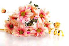 Pink daisy with gold ribbon Stock Photos