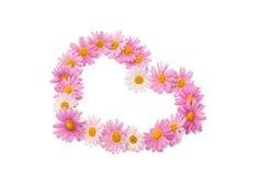 Pink daisy isolated Stock Photo