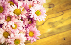 Pink daisy over wood background Royalty Free Stock Images