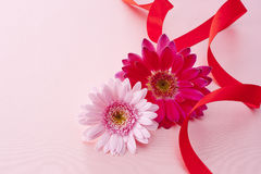 Pink daisy on pink satin Stock Images