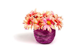 Pink daisy on purple vase Stock Images