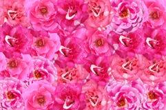 Pink damask rose flower pattern background. Beautiful pink damask rose flower pattern background royalty free stock photos