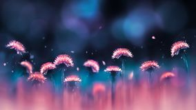 Pink dandelions on a blue and purple background. Spring summer creative image. Free space for text. royalty free stock photos