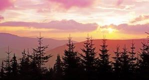 Pink dawn Stock Photo