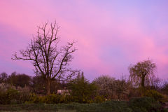 Pink dawn. Rural landscape in spring from the gardens Stock Photo