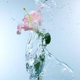 Pink day lily in cool splashing water Stock Image