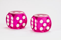 Pink dices Stock Images