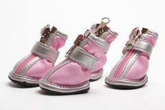 Pink dogs boots  on a white Stock Images