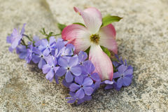 Pink Dogwood Blossom and Blue Moon Phlox. On stone background Stock Images