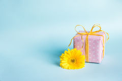 Pink dotted gift box and a yellow gerbera flower over a blue background. Royalty Free Stock Photo