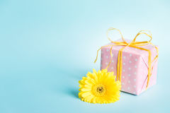 Pink dotted gift box and a yellow gerbera flower over a blue background. Stock Photos