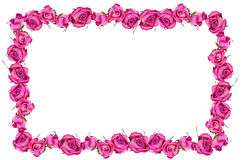 Pink dray roses flowers blossom frame Stock Photo