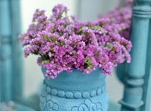 Pink plants in a blue vase close-up stock image