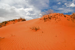 Pink Dunes Royalty Free Stock Image