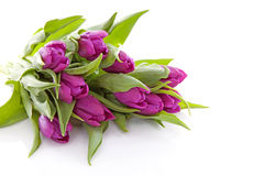 Pink Dutch tulips in closeup Stock Photography