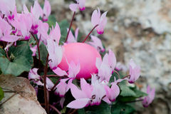 Pink Easter Royalty Free Stock Photo
