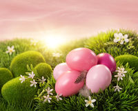 Pink easter eggs Royalty Free Stock Photography