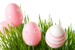 Pink Easter eggs and green wheat plant Royalty Free Stock Images