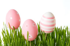 Pink Easter eggs and green wheat plant Stock Images