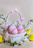 Pink  easter eggs in white basket with  cherry flowers Royalty Free Stock Photos