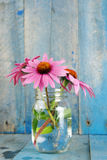 Pink echinacea flowers in jar vertical Royalty Free Stock Photos
