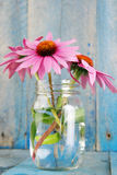 Pink echinacea flowers - vertical bright Stock Image