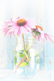 Pink echinacea flowers white wash. Pink echinacea flowers in glass jar on blue wood background vertical-white wash Stock Photos