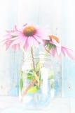Pink echinacea flowers white wash Stock Photos