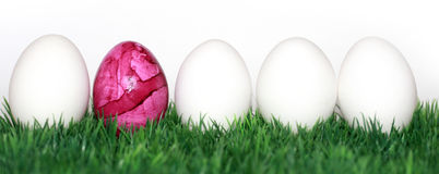Pink egg Stock Images