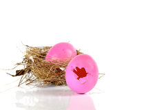 Pink egg,Nests on white background. Royalty Free Stock Images