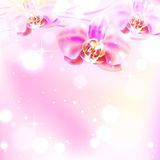Background with orchid. Pink elegant background with orchid Royalty Free Stock Photo