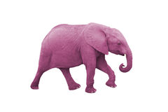 Pink Elephant Stock Photos