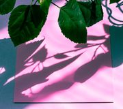 Pink empty card, sheet for writing. Layout for adding tags. Green natural leaves. Natural hard light, deep shadows.  stock image