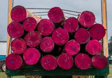 Pink Ended Logs. Logs on a truck panited pink ready to be milled Stock Photos