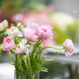 Pink eustoma flowers Stock Images