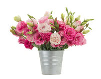 Pink eustoma flowers in metal pot Stock Photography