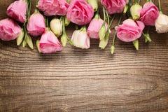 Pink eustoma flowers Stock Photo