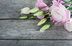 Pink eustomas on old wooden board Stock Images