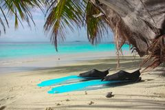 Turquoise blue flippers close up lie on the shore of a tropical island with white sand, in blue lagoon. stock photo