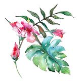 Pink exotic tropical hawaiian flowers. Watercolor background set. Isolated flower illustration element. Pink exotic tropical hawaiian floral botanical flowers royalty free illustration