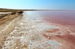 Pink salty Syvash Lake, Ukraine. Pink extremely salty Syvash Lake, colored by microalgae with crystalline salt depositions. Also known as the Putrid Sea or Royalty Free Stock Image