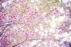 pink för 2 blomma Royaltyfria Foton