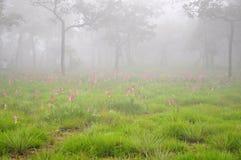 pink för blommadimmaskog Arkivbild