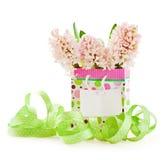 pink för korthälsningshyacint Arkivbild