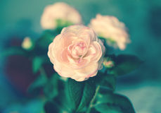 Pink fabric roses on green background, detail. Vintage look Royalty Free Stock Photo