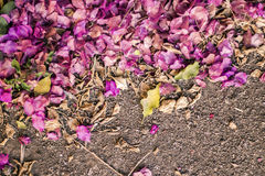 Pink Fallen Flowers on Soil, Abstract Background Stock Photography