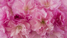 Pink Fantasy Stock Image