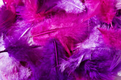 Pink feather Royalty Free Stock Photography